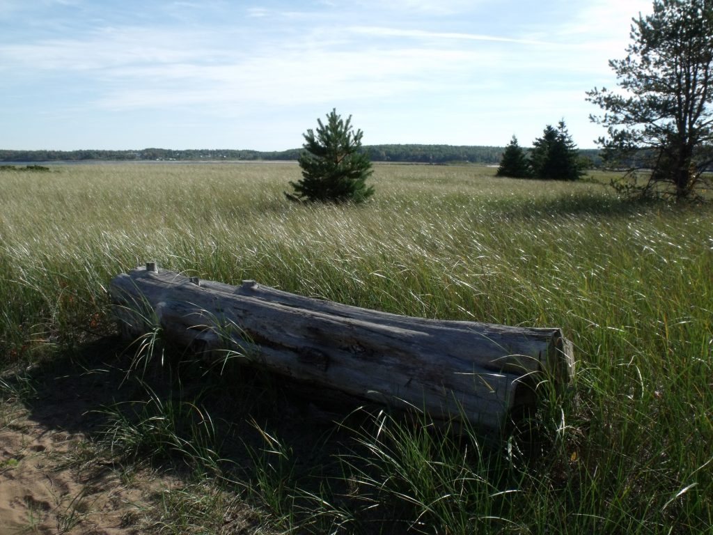 Image of the grasslands before the beach at Harbour Light Campground.