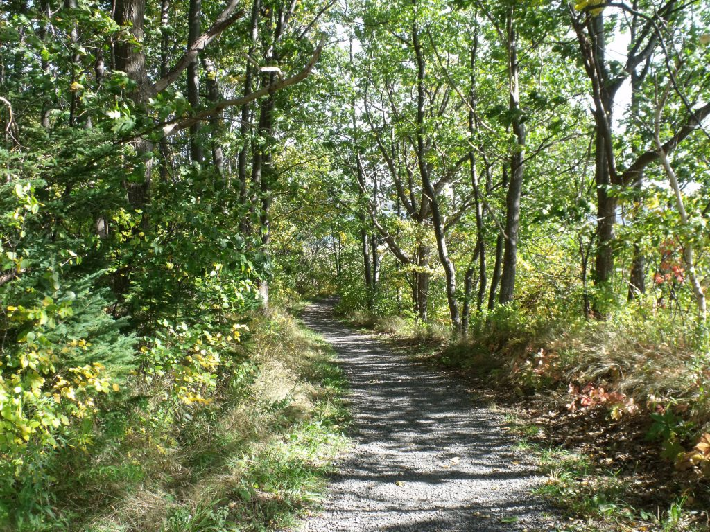 Image of the path to the beach at Harbour Light Campground.